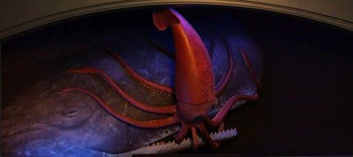 squid_whale.jpg