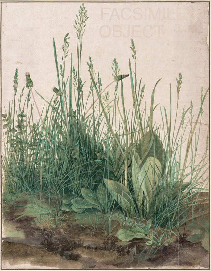 Dürer_Great_Piece_of_Turf_facsimile.jpg